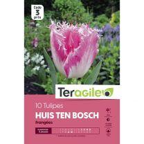 10 Tulipes Huis Ten Bosch Frangées Teragile