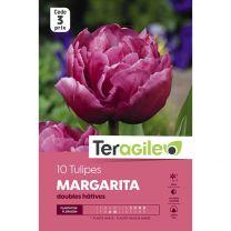 10 Tulipes Margarita Teragile