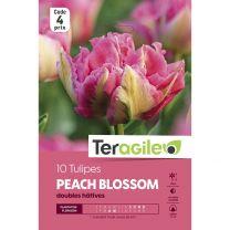 10 Tulipes Peach Blossom Teragile