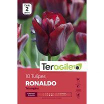 10 Tulipes Ronaldo Triomphe Teragile
