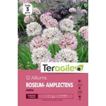 12 Alliums Roseum Amplectens Nains Teragile