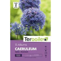 15 Alliums Caeruleum Azureum Nains Teragile