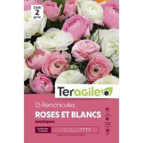 15 Renoncules Roses Et Blancs Asiatiques Teragile