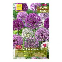 20 Allium décoratifs en Mélange