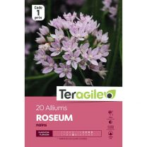20 Alliums Roseum Nains Teragile