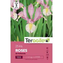 25 Iris Roses De Hollande Teragile