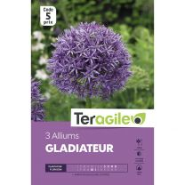 3 Alliums Gladiateur Teragile