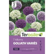 7 Alliums Goliath Variés Teragile