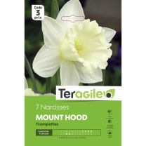 7 Narcisses Mount Hood Trompettes Teragile