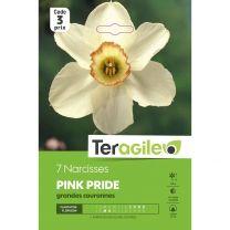 7 Narcisses Pink Pride Teragile
