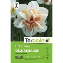 8 Narcisses Delnashaugh Fleurs Doubles Teragile