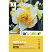 8 Narcisses Love Call Fleurs D'Orchidée Teragile