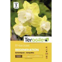8 Narcisses Regeneration Botaniques Joncquilles