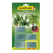 Algo Bâtonnet Plante Verte x25