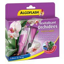 Algo Revitalisant Orchidée x5