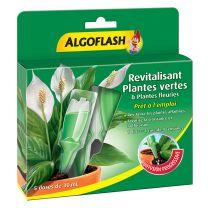 Algo Revitalisant Plante Verte x5