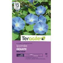Graines Teragile Ipomée Géante Bleu Azur