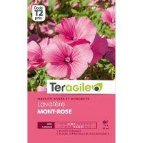 Graines Teragile Lavatère Mont-Rose