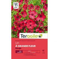 Graines Teragile Lin à Grande Fleur Rouge