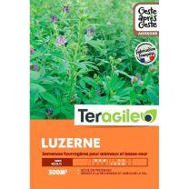 Luzerne Engrais Vert Barenbrug- Fourrage Protéiné