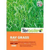 Mélange pour Prairie Ray Grass Anglais Boîte