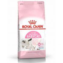 Croquettes pour Chaton et Chatte en Gestation ou Lactation Royal Canin