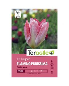 pointvert-est-10-tulipes-flaming-purissima-fosteriana-teragile-ve4035_1.jpg