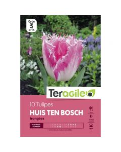 pointvert-est-10-tulipes-huis-ten-bosch-frangees-teragile-ve4037_1.jpg