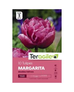 pointvert-est-10-tulipes-margarita-teragile-ve4056_1.jpg