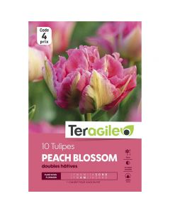 pointvert-est-10-tulipes-peach-blossom-teragile-ve4054_1.jpg