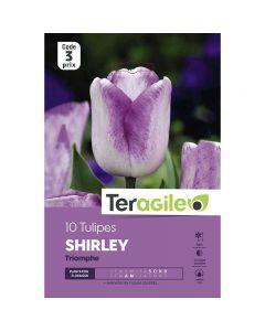 pointvert-est-10-tulipes-shirley-triomphe-teragile-ve4059_1.jpg