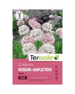 pointvert-est-12-alliums-roseum-amplectens-nains-teragile-ve4048_1.jpg