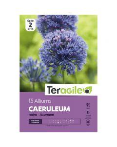 pointvert-est-15-alliums-caeruleum-azureum-nains-teragile-ve4080_1.jpg