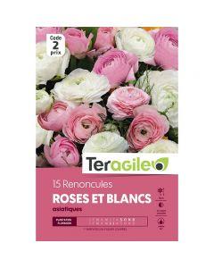 pointvert-est-15-renoncules-roses-et-blancs-asiatiques-teragile-ve4046_1.jpg