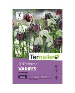 pointvert-est-20-fritillaires-variees-melagris-teragile-ve4068_1.jpg