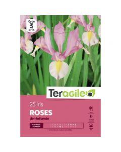 pointvert-est-25-iris-roses-de-hollande-teragile-ve4045_1.jpg