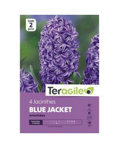 pointvert-est-4-jacinthes-blue-jacket-orientales-teragile-ve4086_1.jpg