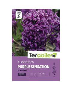 pointvert-est-4-jacinthes-purple-sensation-orientales-teragile-ve4067_1.jpg