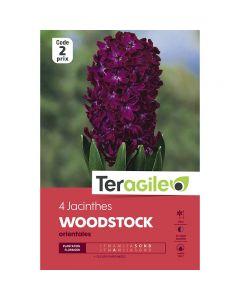 pointvert-est-4-jacinthes-woodstock-orientales-teragile-ve4034_1.jpg