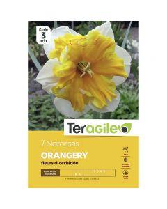 pointvert-est-7-narcisses-orangery-teragile-ve3981_1.jpg