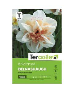 pointvert-est-8-narcisses-delnashaugh-fleurs-doubles-teragile-ve3947_1.jpg