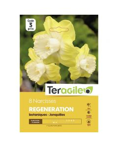 pointvert-est-8-narcisses-regeneration-botaniques-joncquilles-ve3977_1.jpg