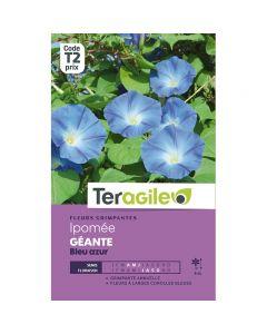 pointvert-est-graines-teragile-ipomee-geante-bleu-azur--ja1659_1.jpg