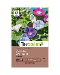 pointvert-est-graines-teragile-ipomee-volubilis-variee--ja1661_1.jpg
