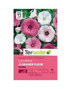 pointvert-est-graines-teragile-lavatere-a-grande-fleur--ja1663_1.jpg