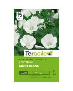 pointvert-est-graines-teragile-lavatere-mont-blanc-ja1664_1.jpg