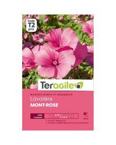 pointvert-est-graines-teragile-lavatere-mont-rose--ja1665_1.jpg